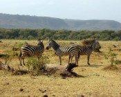 Manyara See Tagesausflug